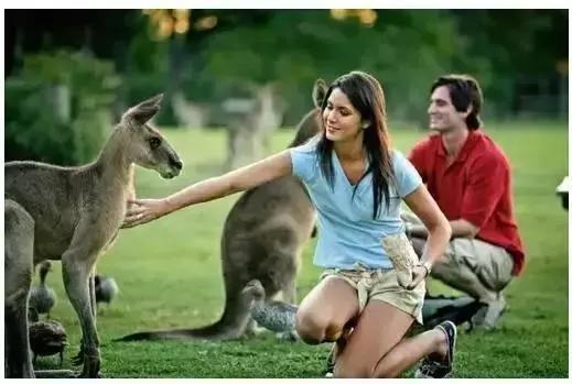 为什么大家都爱去澳洲留学?看完这些福利,我要去申请签证了……