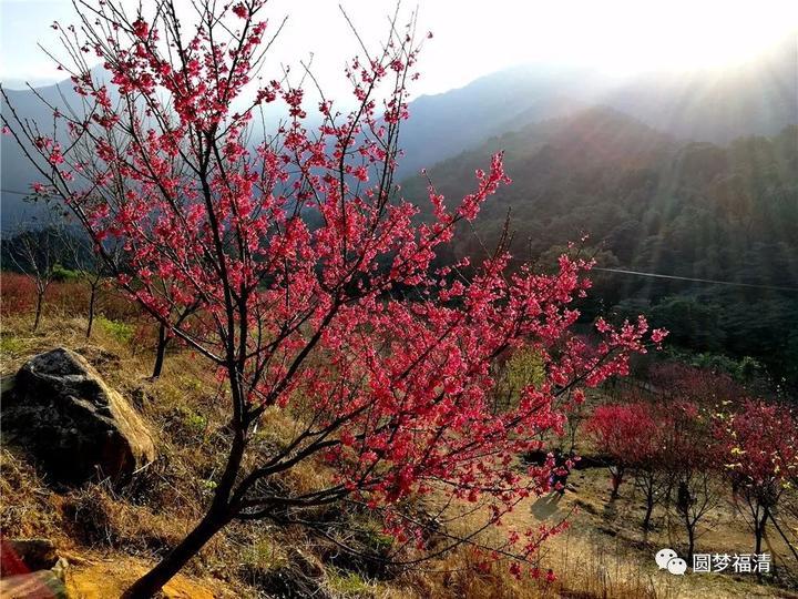 一周一畫畫春天的景色