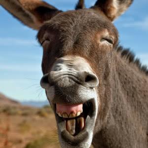 看到这些动物的可爱笑容,真的会让人忍不住笑出来,绝对治愈你的一天.