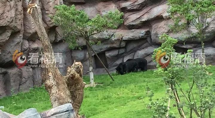 所有福清人,今日福建永鸿野生动物世界开园迎客啦