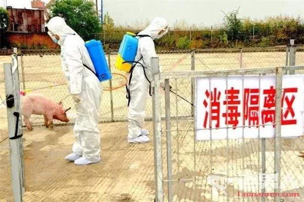 安徽铜陵发生非洲猪瘟疫情,全国确诊14起安徽占一半