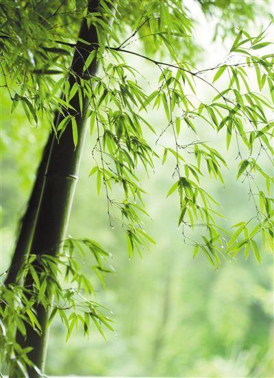 森林现代斧位置图片
