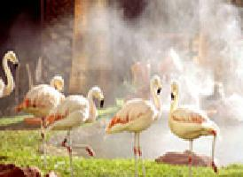 红鹤野生公园 Wildlife Habitat<