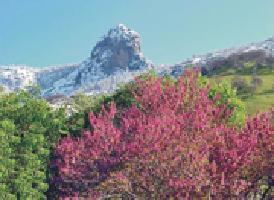 红杉与国王峡谷国家公园 Sequoia &amp; Kings Canyon Park<