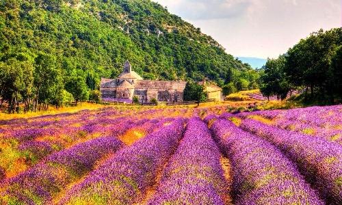 法国薰衣草城堡是种怎样的体验呢?<
