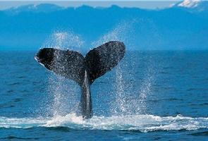 新东方特别推荐:鲸鱼岛三天两夜游